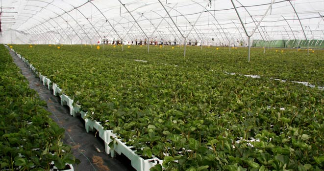 Sag actualiza normativa de viveros y dep sitos de plantas for Viveros de plantas