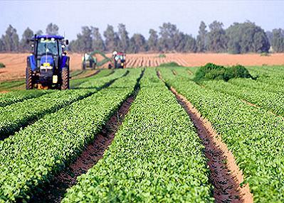 Desarrollo-agrícola-Sagarpa